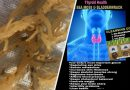 Sea Moss Does Not Cure Thyroid Disease. But People Sell It Online Anyway.