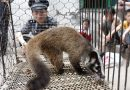 China bans wildlife trade over coronavirus outbreak