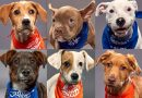 Puppy Bowl XVI photos: Meet the rescue dogs