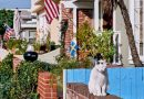 Balboa Island, Calif.: An Expensive Retreat for a Dedicated Following
