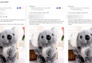Online Koala Toy Stores Promised They Would Donate Some Proceeds To Charity. Did They?