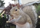 The Squirrel Ninja Warrior obstacle course is nuts