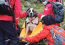 This 120-pound St. Bernard was rescued from England's highest peak when she collapsed