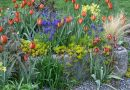 Yes, It's Already Time to Buy Bulbs for Fall Planting