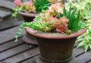 What to Plant in a Hot, Dry Year? Succulents, of Course