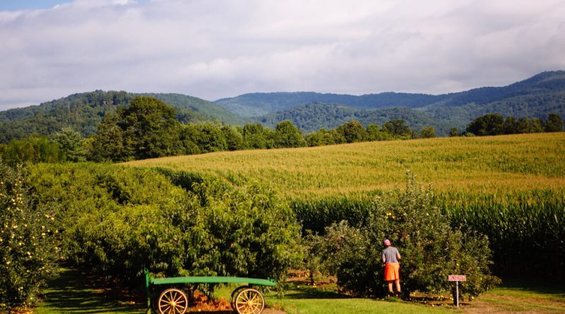 Fall's Almost Here. Can We Still Go Apple Picking?