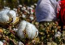 U.S. Restricts Chinese Apparel and Tech Products, Citing Forced Labor