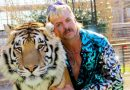 2020's 10 best true-crime documentaries: 'Tiger King' 'McMillions,' more